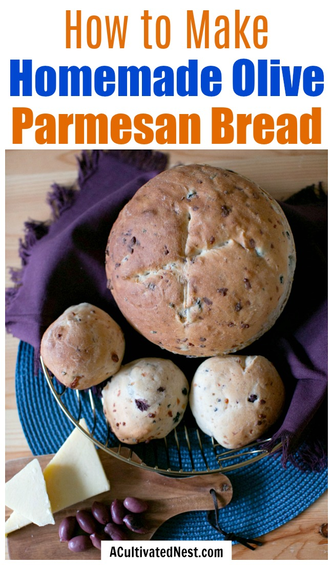 Homemade Olive Parmesan Bread- There's nothing better than fresh baked bread! If you want to make a gourmet bread, this homemade olive Parmesan bread is delicious and a perfect pair for so many dishes! | homemade bread recipe, how to make bread without a bread machine, bread rolls recipe, how to make bread from scratch, #homemade #baking #breadRecipe #recipe #ACultivatedNest