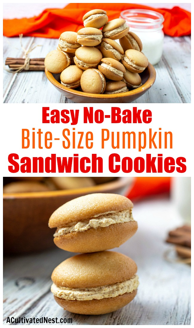 Mini Pumpkin Cheesecake Sandwich Cookies- These bite-size no bake pumpkin sandwich cookies are the perfect snack size fall treat! Since it's so easy to make a lot of these, they're perfect for bill get togethers! | fall dessert recipes, autumn treat recipes, #dessertRecipe #pumpkin #cookies #recipe #ACultivatedNest