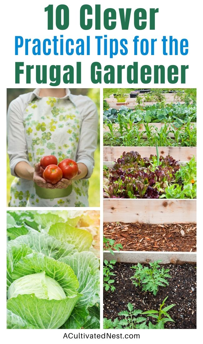 10 Practical Tips for the Frugal Gardener- Even if you're on a budget, you can still grow a gorgeous vegetable garden or flower garden! Here are my top 10 practical tips for the frugal gardener! | how to save money on your garden, vegetable garden money saving tips, #gardeningTips #frugalGarden #gardening #vegetableGarden #ACultivatedNest