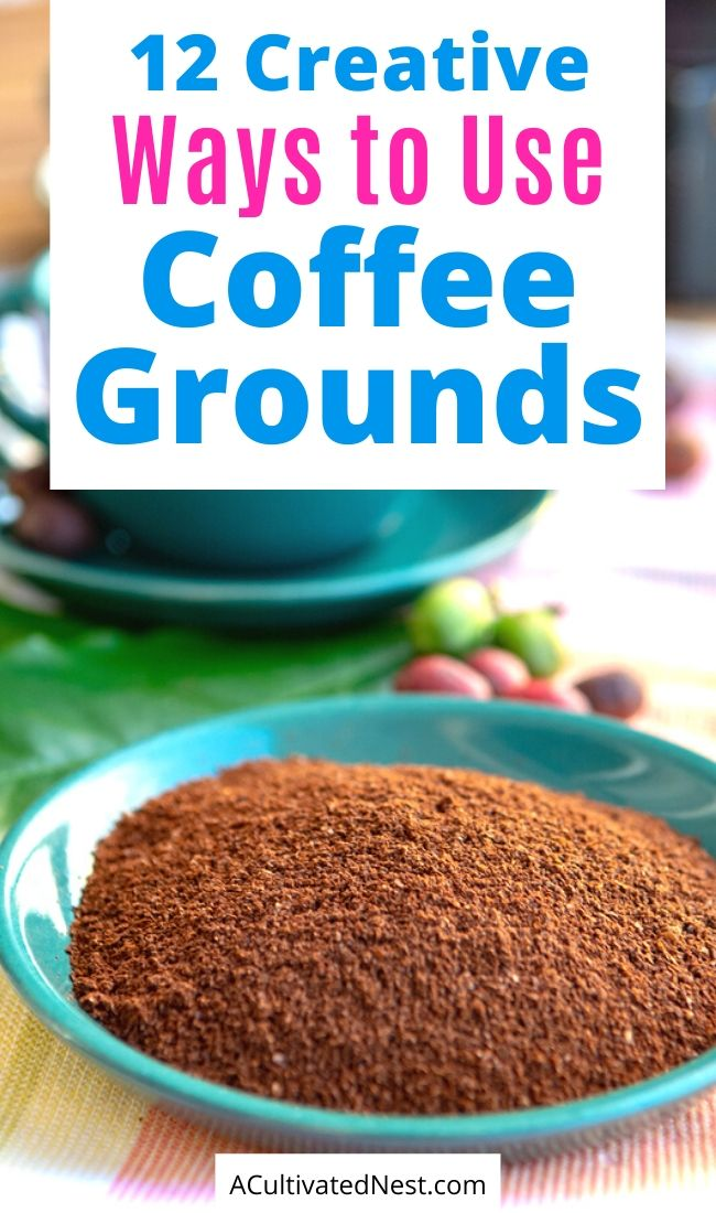 12 Creative Ways to Use Coffee Grounds- Instead of throwing them out, check out these creative ways to use coffee grounds! Coffee grounds can be so helpful in your home and garden! | what to do with coffee grounds, #upcycling #repurpose #moneySavingTips #coffee #ACultivatedNest