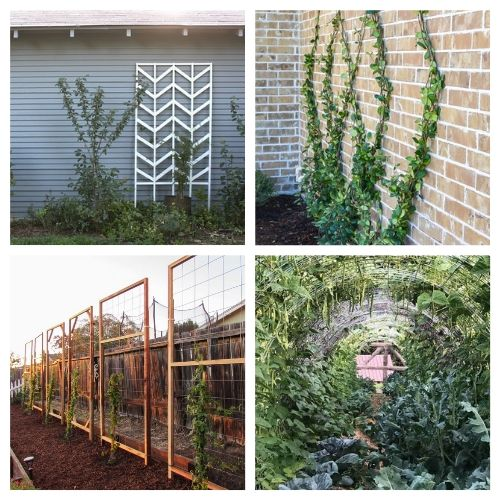 20 Gorgeous Garden DIY Trellises- Add some charm and character to your yard with these gorgeous DIY garden trellises! They're functional and a lovely way to decorate your garden! | #DIY #garden #trellis #gardenDIY #ACultivatedNest