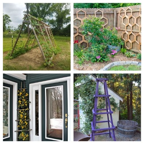 20 Gorgeous Trellis DIY Designs- Add some charm and character to your yard with these gorgeous DIY garden trellises! They're functional and a lovely way to decorate your garden! | #DIY #garden #trellis #gardenDIY #ACultivatedNest