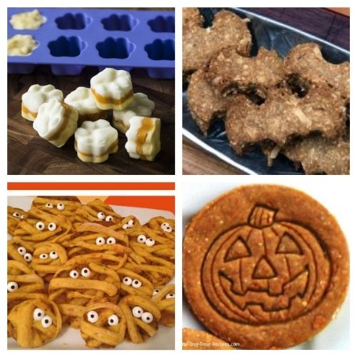 20 Fall Dog Treat Recipes- Your pooch is going to love you when you give him any of these homemade fall dog treats! They are super easy to make! | homemade Halloween dog treats, #dogTreats #homemadeDogTreats #petTreats #diyDogTreats #ACultivatedNest