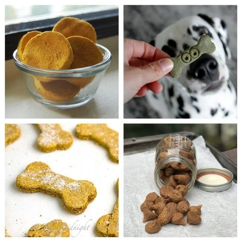 20 Fall and Halloween Dog Treat Recipes- Your pooch is going to love you when you give him any of these homemade fall dog treats! They are super easy to make! | homemade Halloween dog treats, #dogTreats #homemadeDogTreats #petTreats #diyDogTreats #ACultivatedNest