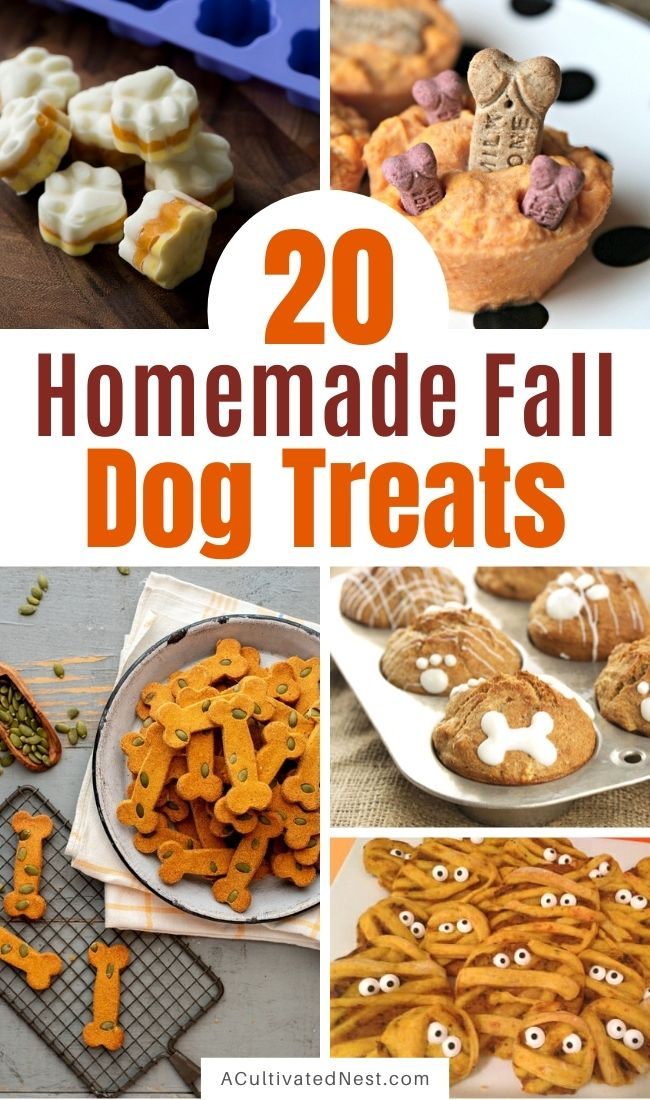 20 Homemade Fall Dog Treats- Your furbaby will love these homemade fall dog treats! There are so many tasty and easy DIY dog treats you can make for fall and Halloween! | #homemadeDogTreats #dogTreats #dogTreatRecipes #diyDogTreats #ACultivatedNest