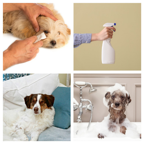 12 Dog Grooming Product DIYs- These DIY dog grooming products will get your dog clean and smelling great! Homemade pet supplies are also a great way to save money! | homemade dog shampoo, homemade dog ear cleaner, homemade dog eye wipes, #petSupplies #dogGrooming #saveMoney #DIYs #ACultivatedNest