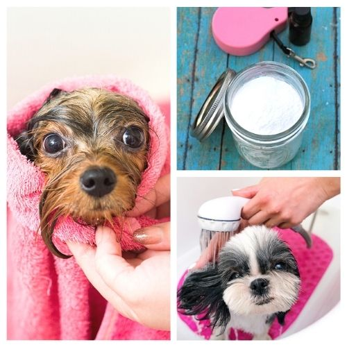 12 DIY Dog Grooming Products- These DIY dog grooming products will get your dog clean and smelling great! Homemade pet supplies are also a great way to save money! | homemade dog shampoo, homemade dog ear cleaner, homemade dog eye wipes, #petSupplies #dogGrooming #saveMoney #DIYs #ACultivatedNest