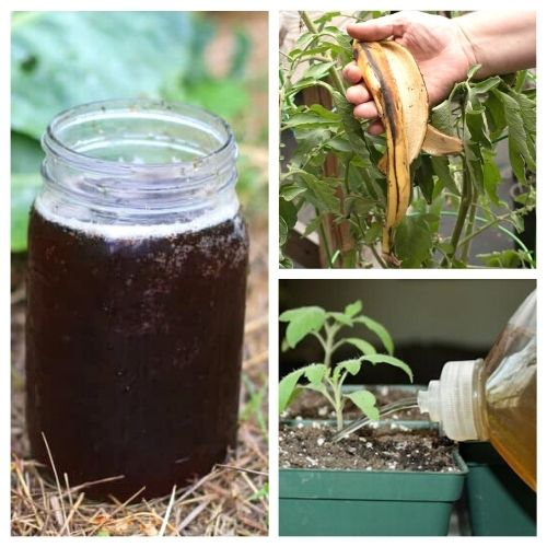 10 Best Homemade Plant Fertilizers- These 10 homemade plant fertilizers will have your garden in the best shape ever. These DIY fertilizers are perfect for all kinds of veggies! | DIY gardening products, #gardeningTips #garden #diyGarden #DIY #ACultivatedNest